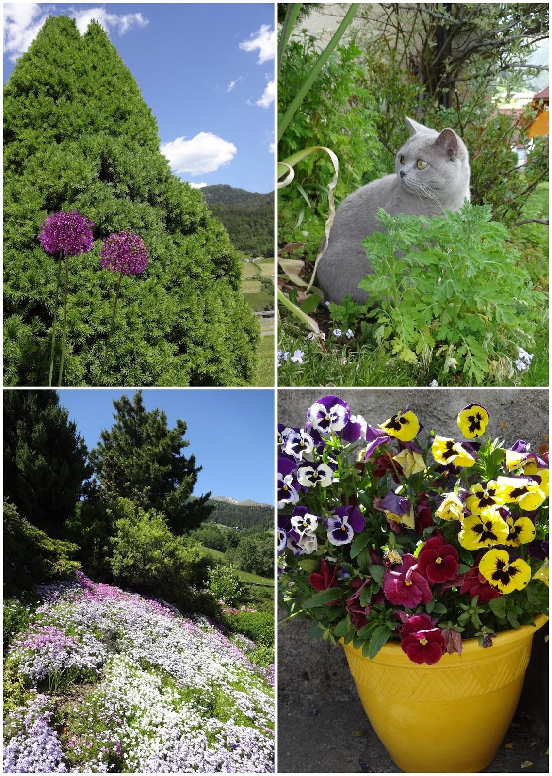 BKH Blumen Bäume