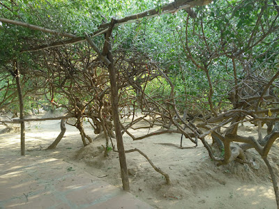 Nidhivan,Rang mahal,Temple,Vrindavan,Tomb of Haridas ji Maharaj, Vishakha kund,Shri Krishna, Radha Rani,