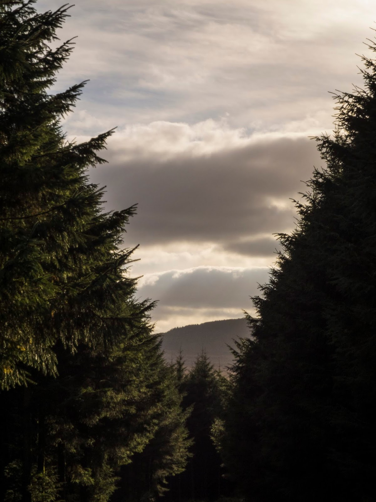 Sunlight shining on conifer trees with a mountain in the distance.