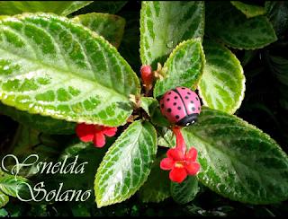 Anfitriona-Reto-Mensual-Bloguer@s-en-Rojo-Blanco -Verde