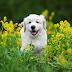 8 lucruri fascinante despre caini