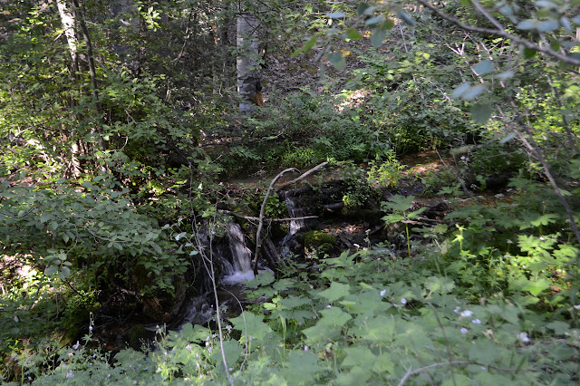 water flowing over logs between lots of green