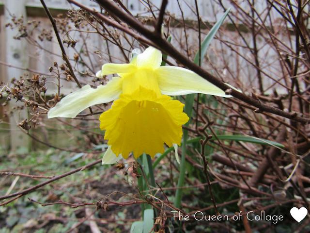 #MySundayPhoto- Spring Has Sprung?