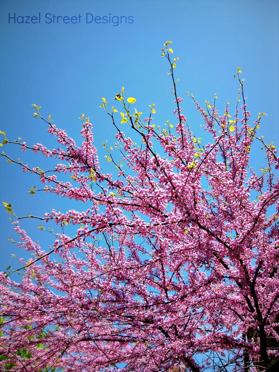 Living in My Pajamas: Pink Spring Trees