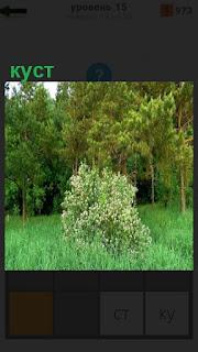 Около леса на поляне растет куст с белыми цветами