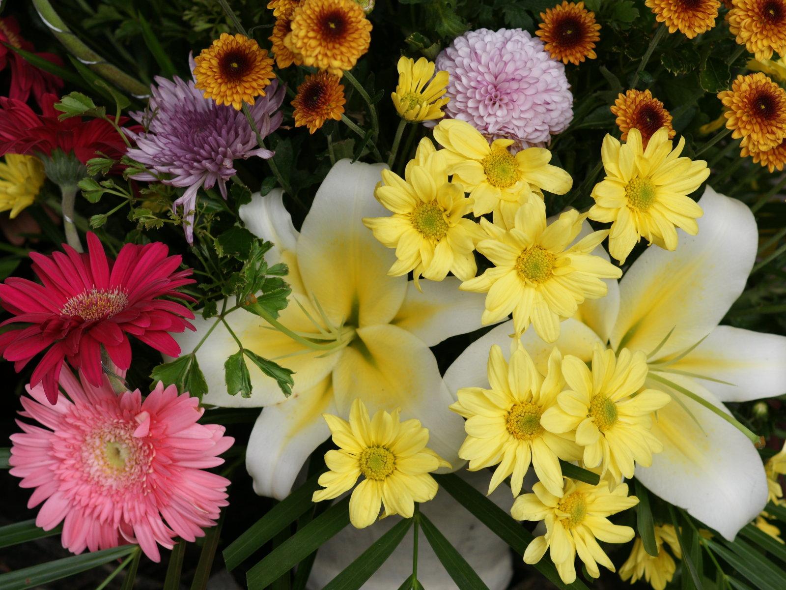 Beauty Flower Variety Flowers