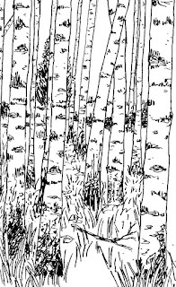 black line drawing of birch forest by David Borden