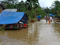 Dampak Banjir: Ratusan Hektar Sawah Terendam dan Kebun Merica Gagal Panen