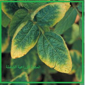 سؤال و جواب في التسميد :  ما هي اعراض نقص عنصر البوتاسيوم التي تظهر على نمو محاصيل الفاكهة؟