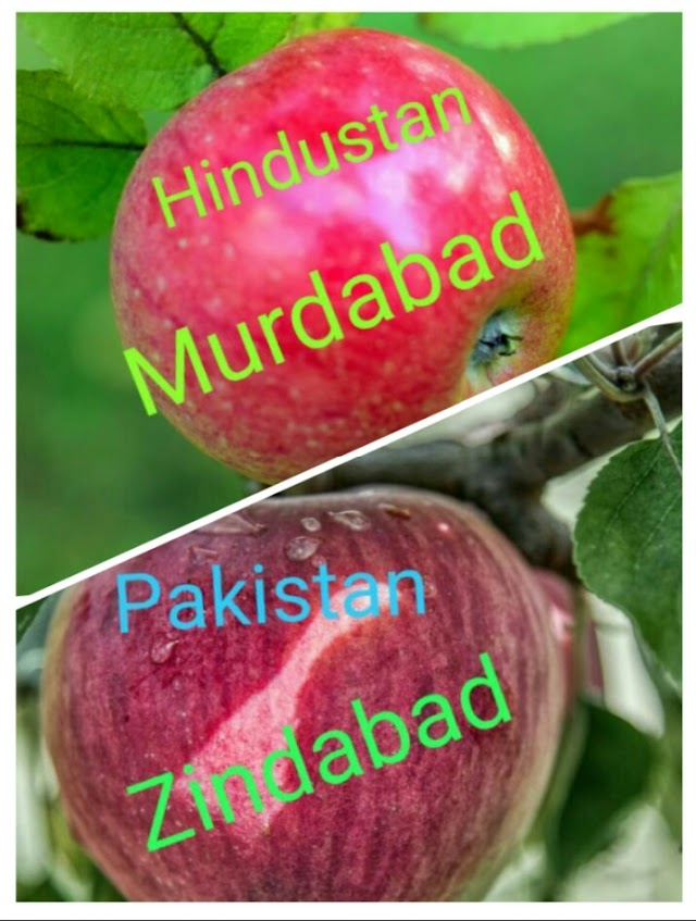 What Pakistan did not receive now took the help of Kashmiri apples, knowing that it would be very surprising
