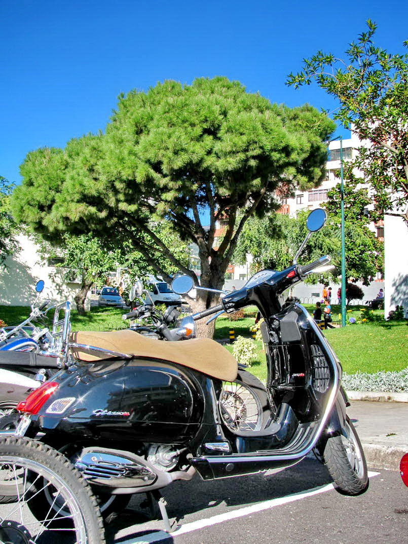 the motorcycle and the tree