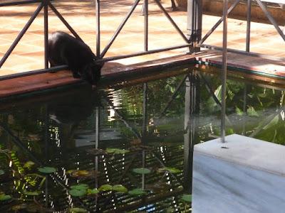 Gato bebiendo en el Jardín Botánico de Valencia