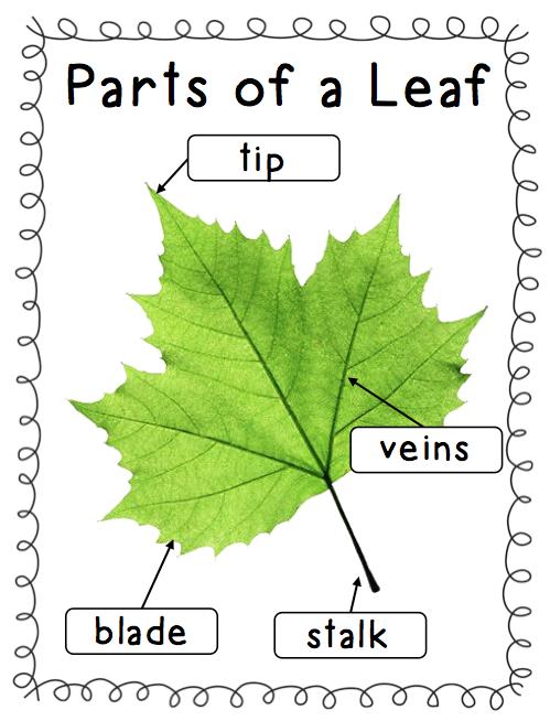 Mrs Ricca's Kindergarten: Pumpkins and Apples and Leaves