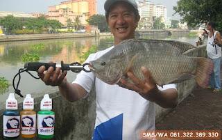 Essen Ikan Nila Khusus Di Rawa