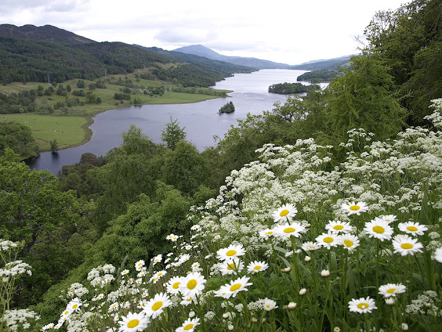 Scotland Forests - Cool temperate