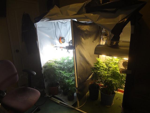 Advice on grow room