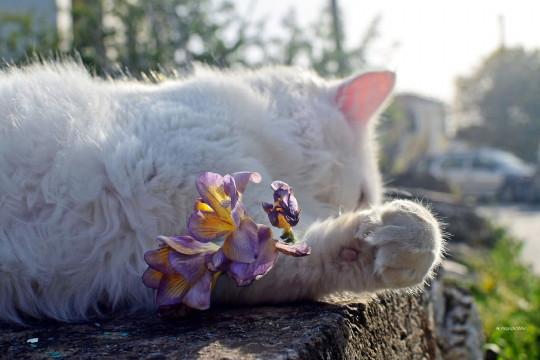 Εναςχαϊδάρης γάτης