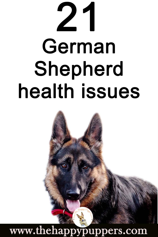 Potential German Shepherd health issues