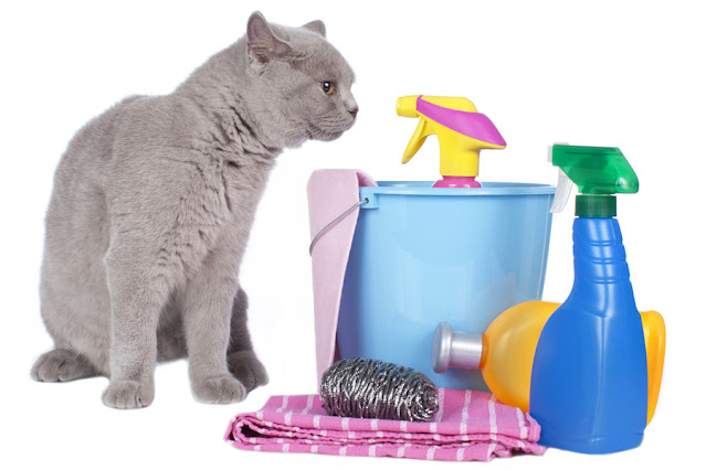 cat with cleaning supplies