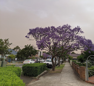 A suburban street in Sydney, a jacaranda tree in full purple glory of bloom, the sky is muted and ugly brown from thick smoke.