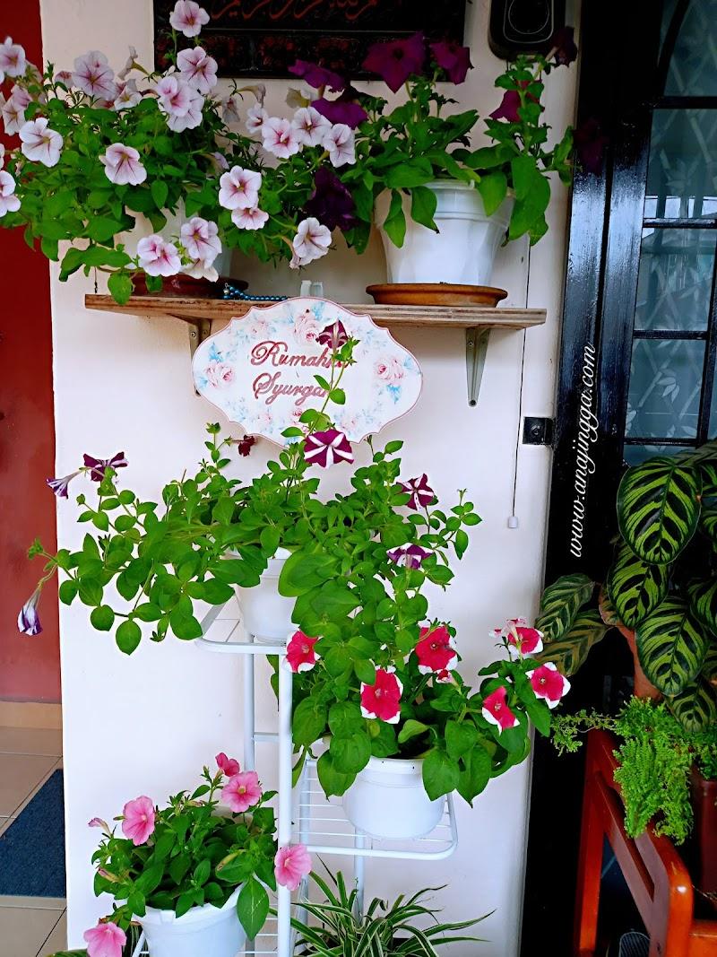 Koleksi pokok bunga petunia