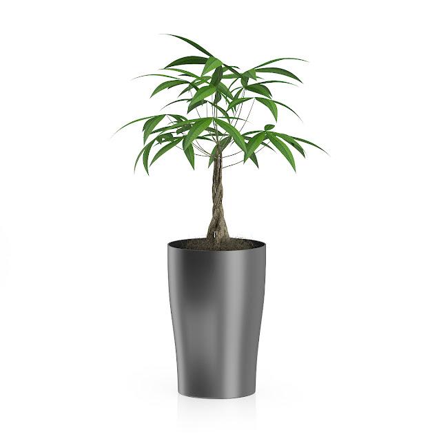 3D model free -  Plants_26
