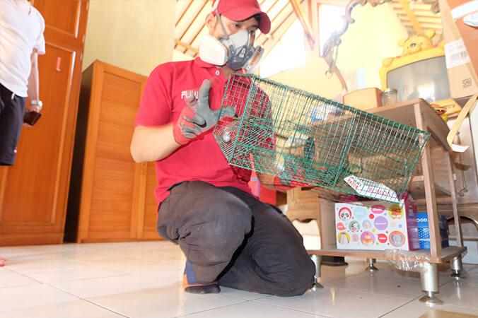 Memilih Jasa Pembasmi Tikus Bandung