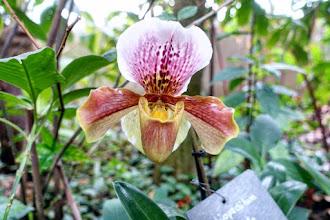 Expo : Mille & Une Orchidées 2020 - Grande Serre Tropicale du Jardin des Plantes - Jusqu'au 2 mars 2020