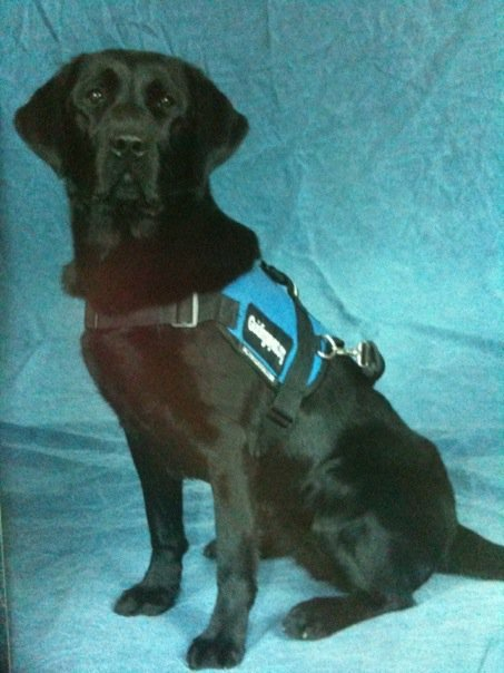 The Story Of Our Autism Service Dog Paula The Autism