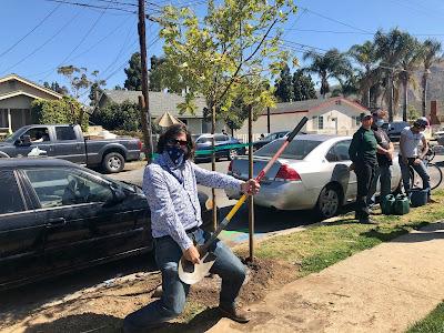 Jason Brock Planting Trees Not NFTs