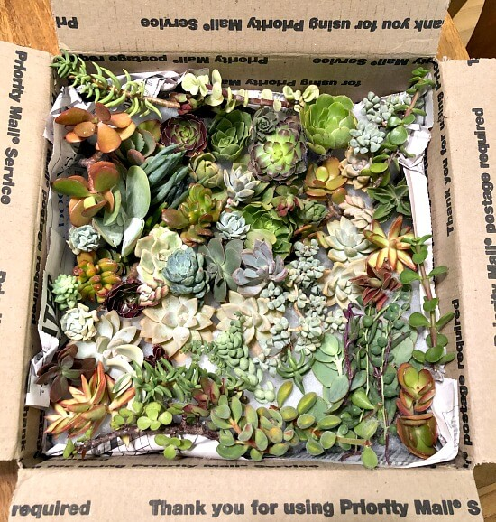 How to Make a DIY Succulent Planter Frame