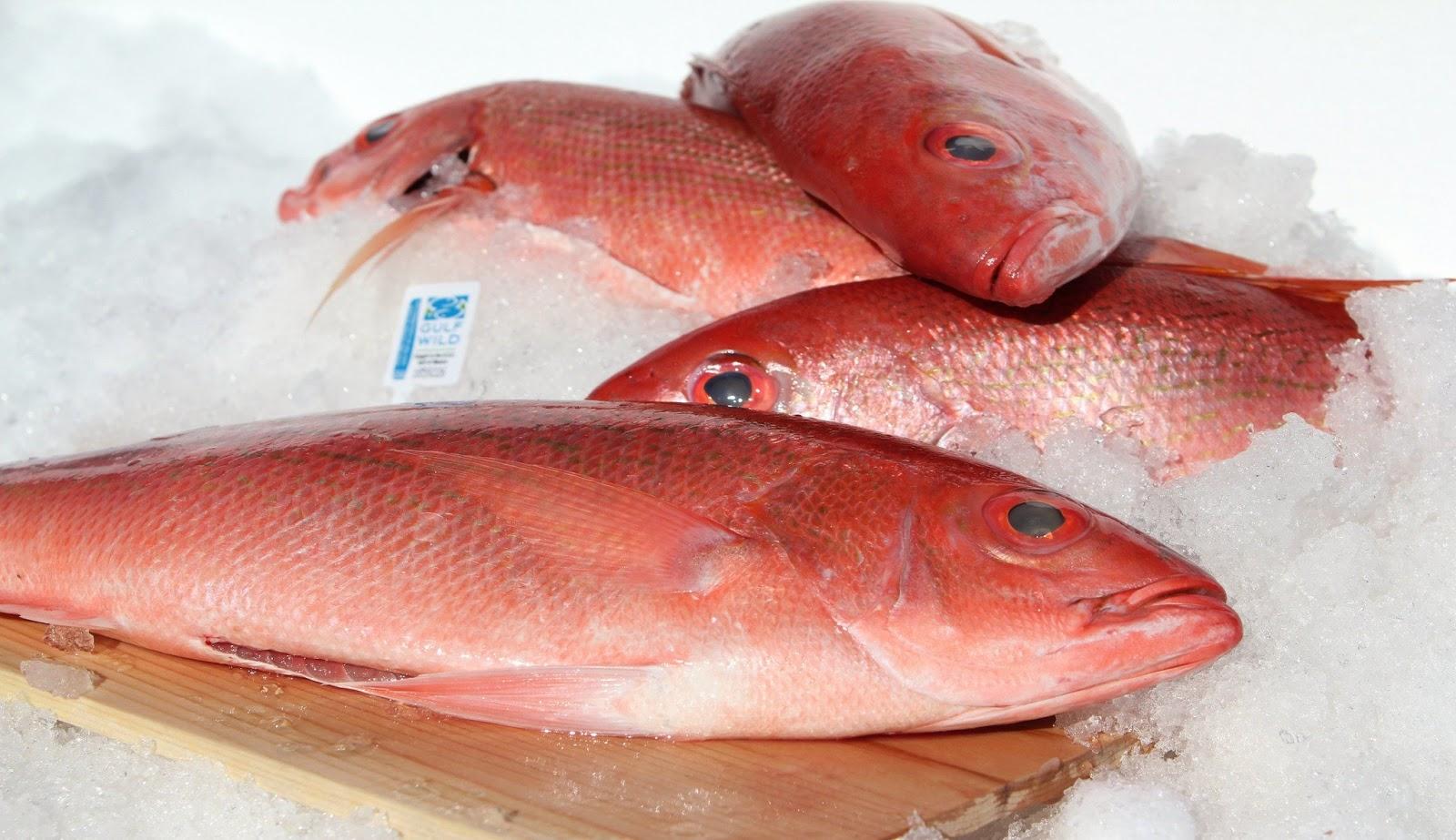 Red Snapper Fish Taste - Red Snapper Fish, Red Snapper Fish ...