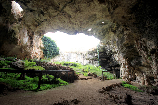 Naracoorte, where a half-million years of biodiversity and climate history are trapped in caves