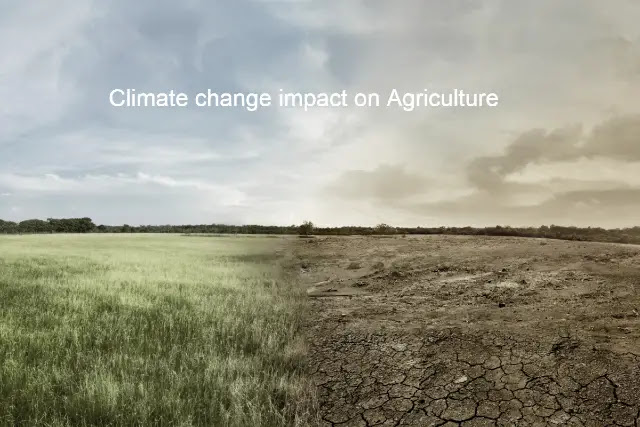 Climate change impact on agriculture