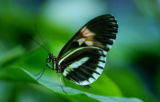 Gunakan Kamera DSLR supaya Fokus objek lebih detail di Taman Wisata Kupu-Kupu atau Bali Butterfly Park