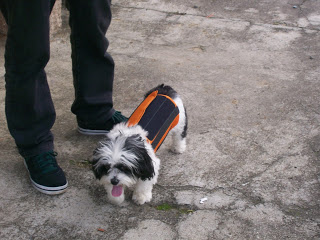 DDI em cães