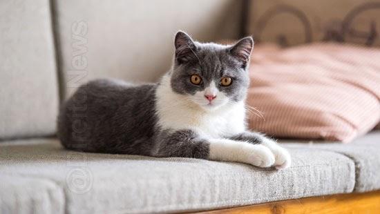 justica limita numero gatos apartamento cinco