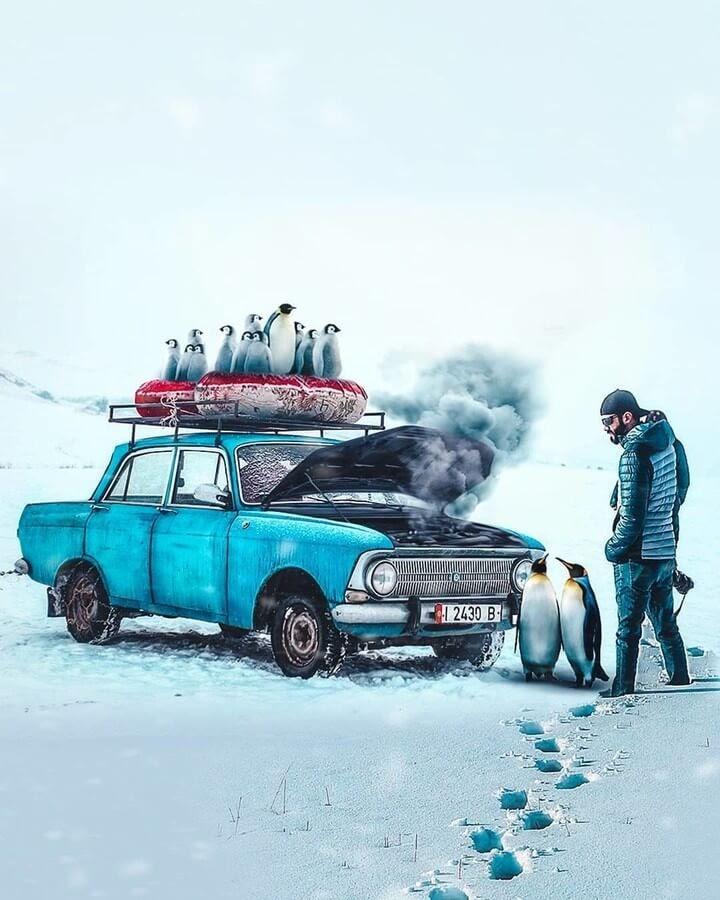 08-Penguins-on-a-trip-Jose-Francese-www-designstack-co