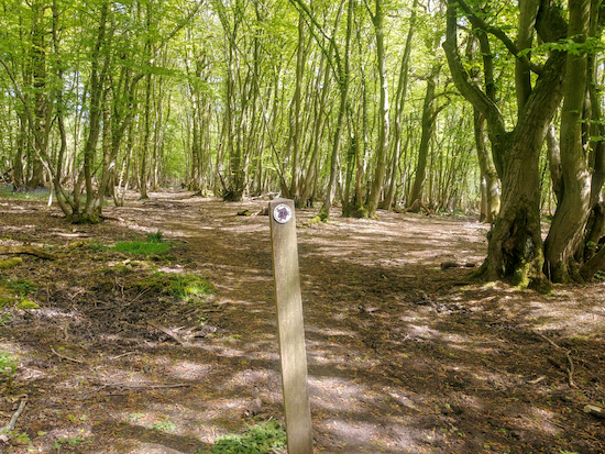 Take the right fork and head E through the woodland