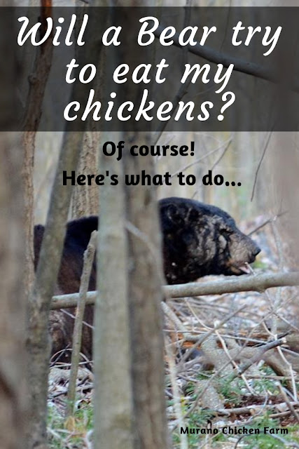 bears eat chickens, here's how to keep them away
