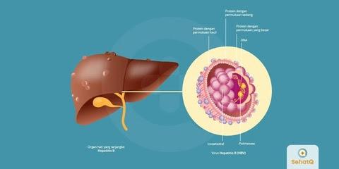 Layanan SehatQ.com Mempermudah Pelayanan Penyakit Hepatitis B