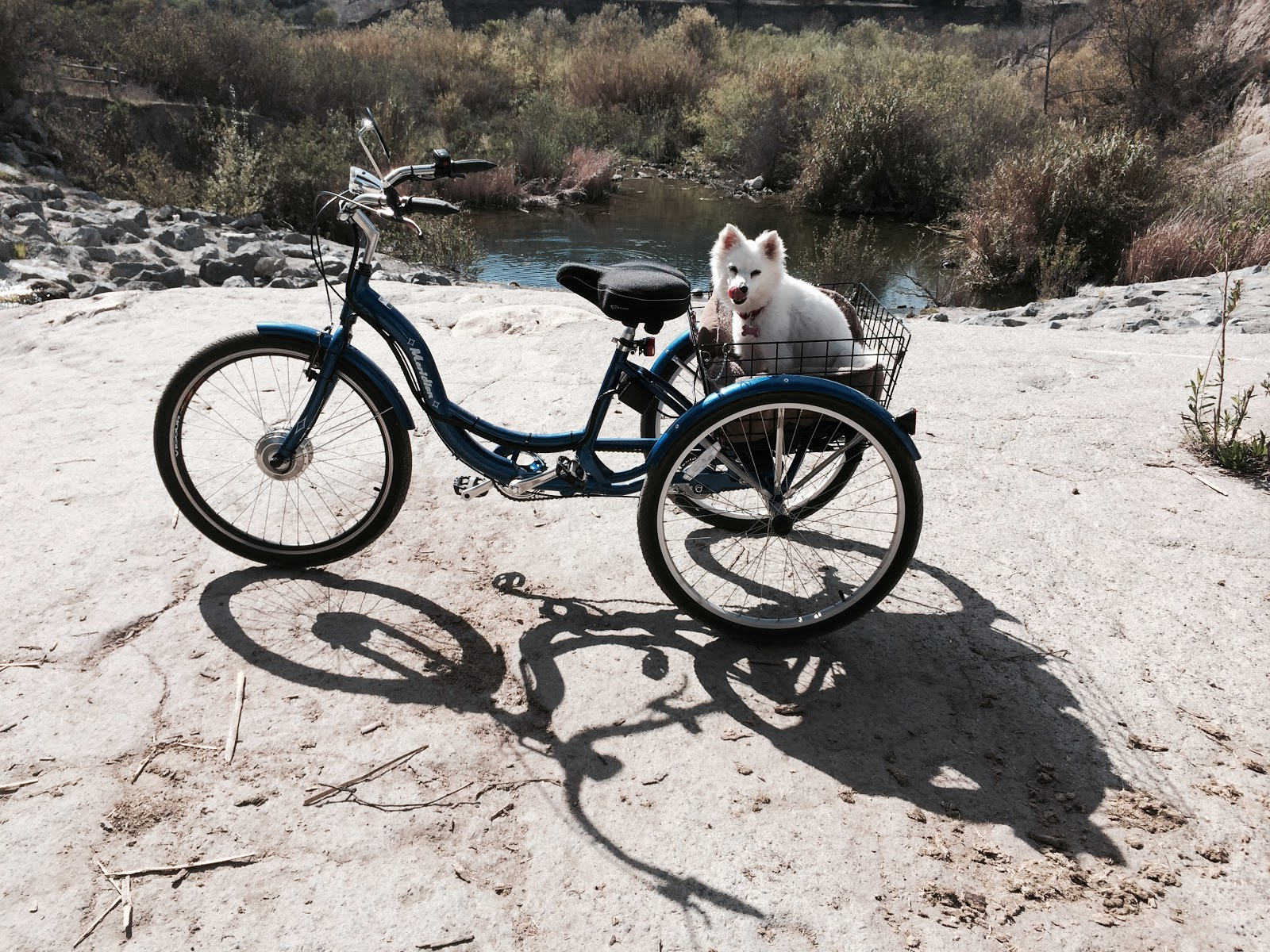 tricycle, dog, San Juan Capistrano North West Open Space