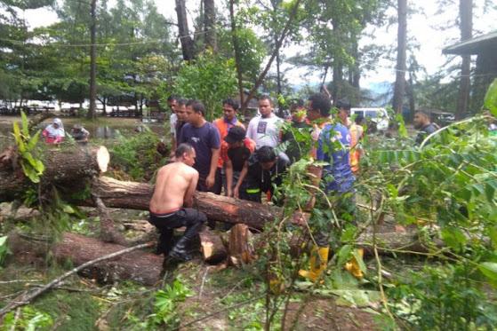 Pohon Tmbang Akibat Hujan dan Angin Kencang di Tapteng Rusak Bangunan