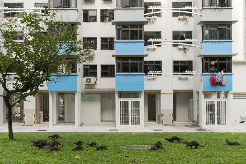 The otters are becoming synonymous with Singapore