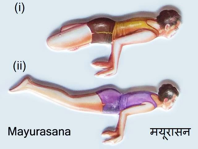 Mayurasana: Mayurasana in Hindi