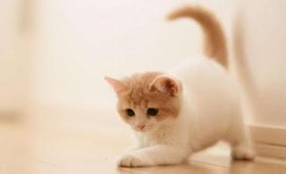 معنى القطة في منام العزباء