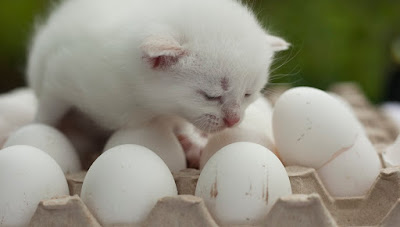 Can Cats Eat Eggs? And If So, Are Eggs Good for Cats?