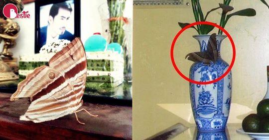 Giải mã hiện tượng bướm bay vào đậu trên bàn thờ: Điểm lành xuất hiện.  có người tin là linh hồn