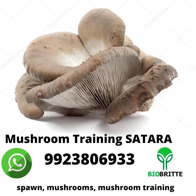 Mushroom Training Satara