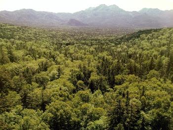 カムイの森